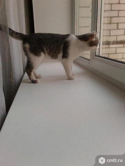 Серенький красавчик кот. Фото 5.