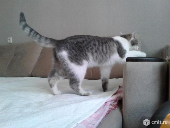 Классный кот в добрые руки. Фото 7.