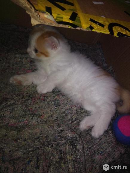 Котята рождены 8 марта. Фото 1.