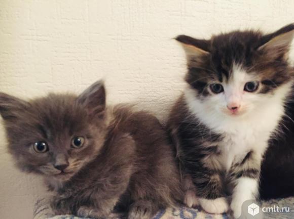 Котятки. Фото 7.