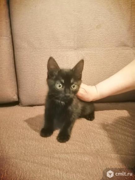 Отдаю котят. Фото 4.