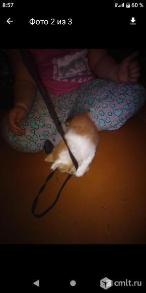 Котята рождены 8 марта. Фото 4.