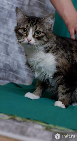 Кошечке Симбе нужен дом. Фото 1.