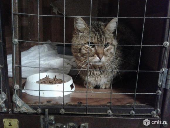 Кот серого окраса. Фото 1.