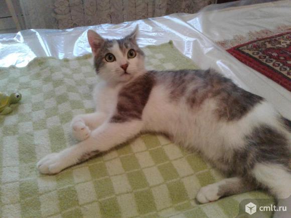 Кот серо-белого окраса. Фото 1.