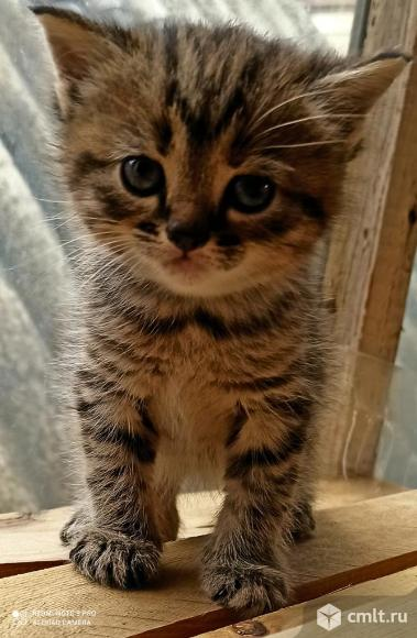 Кошечка. 1 месяц. Фото 2.