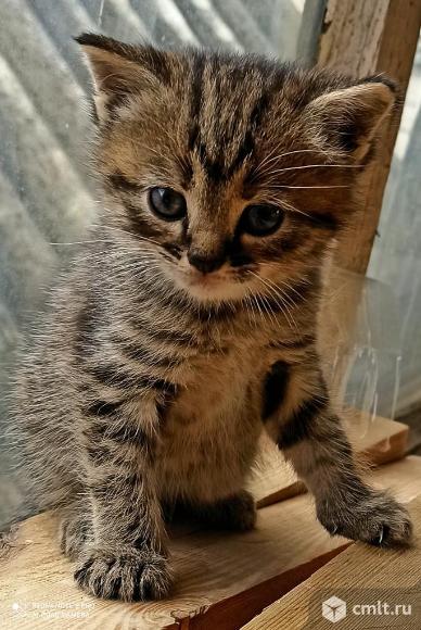 Кошечка. 1 месяц. Фото 1.