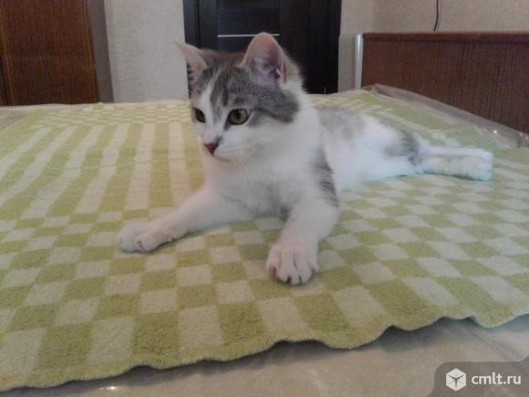 Котенок (кот; 6 месяцев). Фото 1.