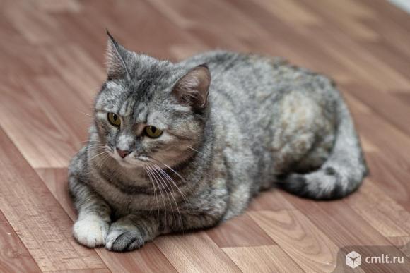 Кошечка с особенностью в семью. Фото 1.