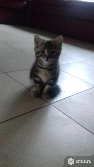 Котенок девочка. Фото 1.