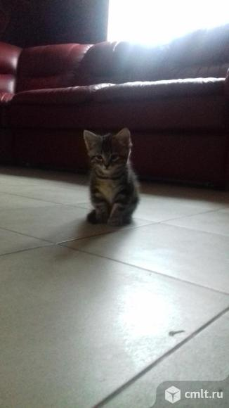 Котенок девочка. Фото 3.