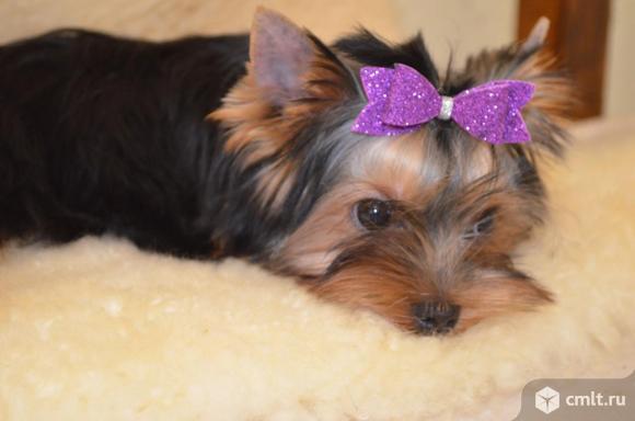 Очаровательный щенок. Фото 1.