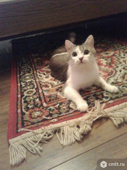 Молодой кот светлого окраса. Фото 1.