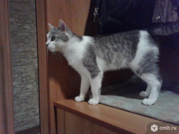 Молодой кот светлого окраса. Фото 5.