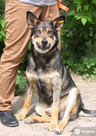 Красивый пес Барбос. Фото 1.