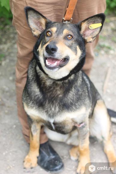 Красивый пес Барбос. Фото 10.