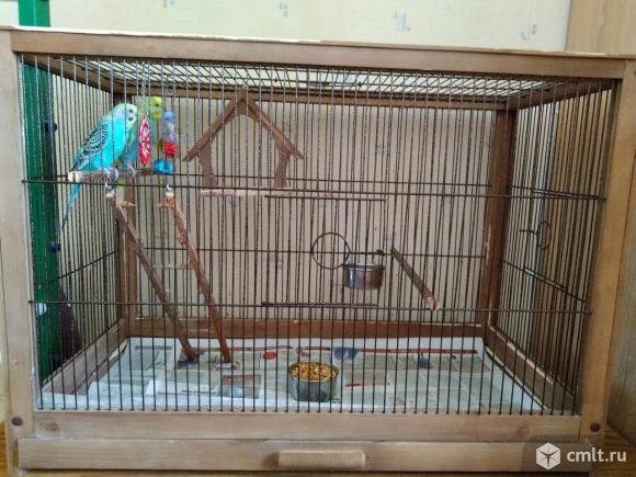 Волнистый попугай с клеткой. Фото 1.