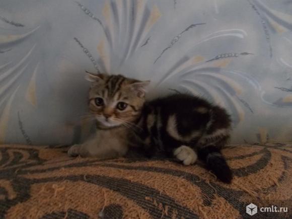Котята. Фото 9.