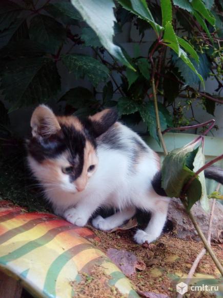 Котенку нужен дом. Фото 1.