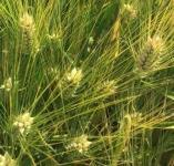 Семена пшеница ячмень тритикале АГРОАСТРА