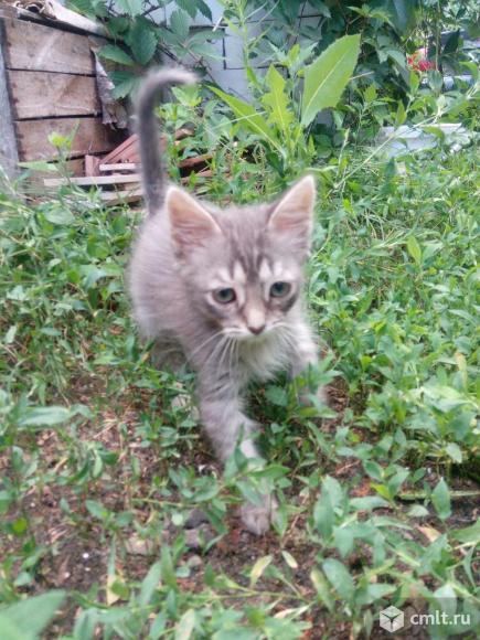 Котенок ждет хозяина. Фото 1.