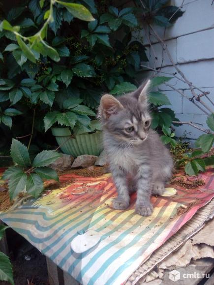 Котенок ждет хозяина. Фото 3.