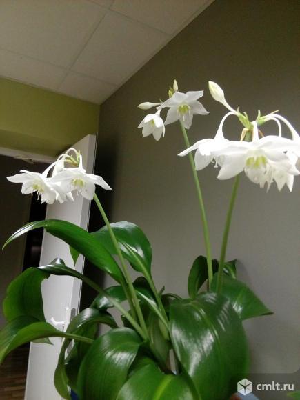 Комнатные цветы. Фото 1.