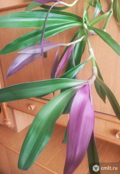 Комнатные цветы. Фото 2.