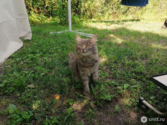 Найдена кошка. Фото 1.