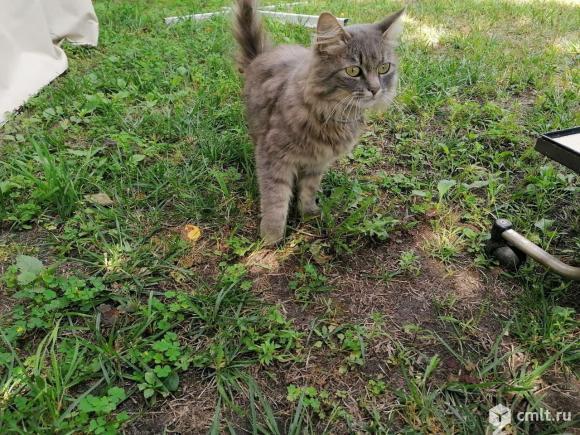 Найдена кошка. Фото 2.