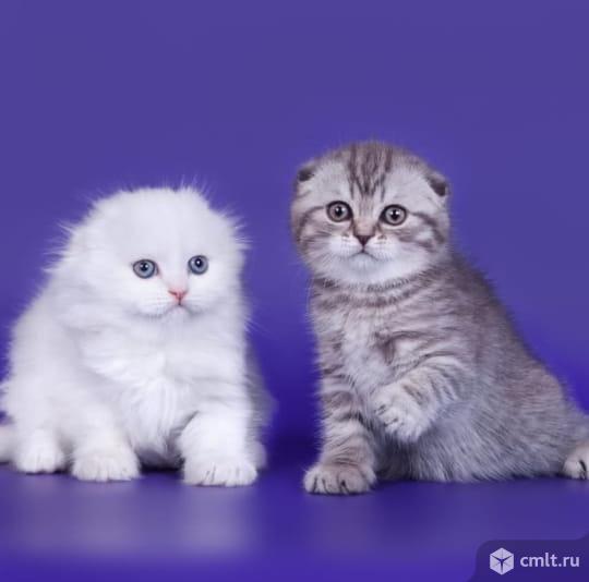 Котенок в друзья. Фото 1.