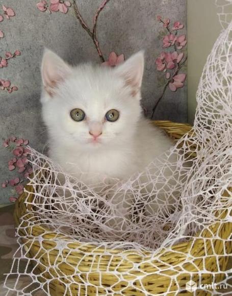 Котенок в друзья. Фото 3.