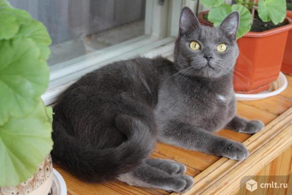 Кошечка Маруся ищет дом. Фото 5.