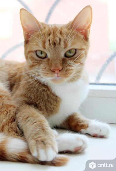 Кошечка Рыжка ищет дом. Фото 1.