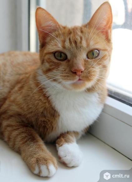 Кошечка Рыжка ищет дом. Фото 5.