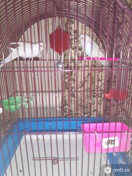 Попугаи. Фото 2.
