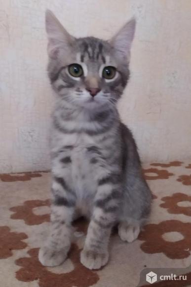 Котенок Тимурчик ищет хозяина. Фото 1.
