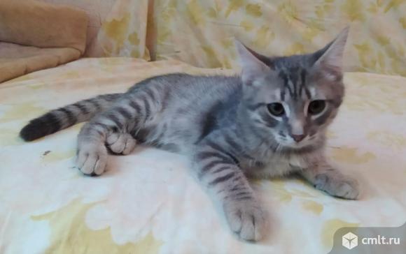 Котенок Тимурчик ищет хозяина. Фото 3.