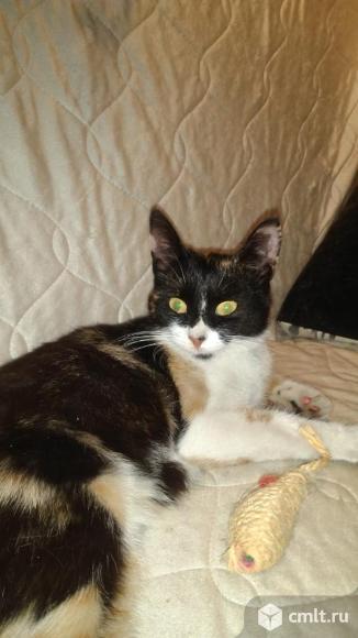 Кошечка трёхцветная ищет дом.. Фото 1.