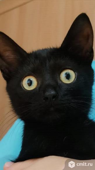 Котенок Сухарик. Фото 5.