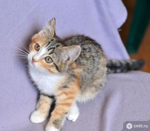 Котенок от кошки мышеловки в дар. Фото 1.