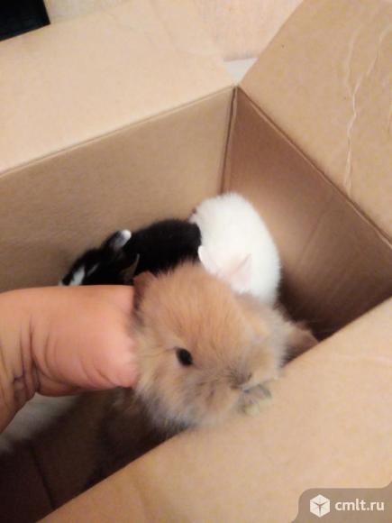 Крольчата декоративные. Фото 1.