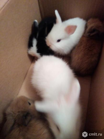 Крольчата декоративные. Фото 6.