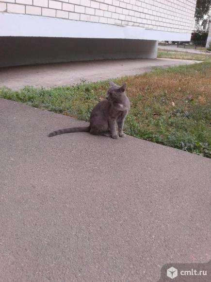 Котятам нужен дом. Фото 1.