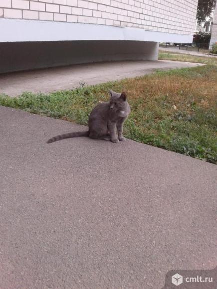 Котятам нужен дом. Фото 6.