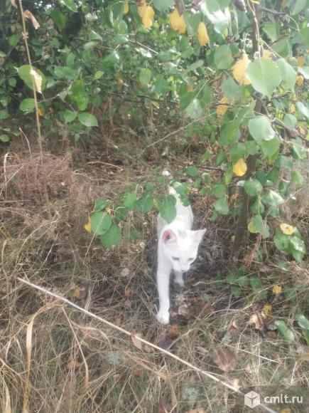 Белый котёнок. Фото 1.