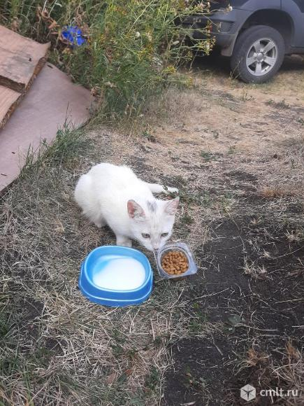 Белый котёнок. Фото 5.