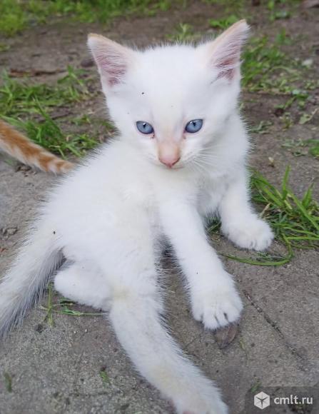 Отдам котят в добрые руки. Фото 3.