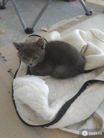 Отдам котенка. Фото 1.