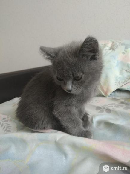 Отдам котенка. Фото 4.